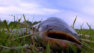 Ловля сома с берега Ночная рыбалка в Астрахани