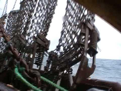 Trawl Scallops.wmv