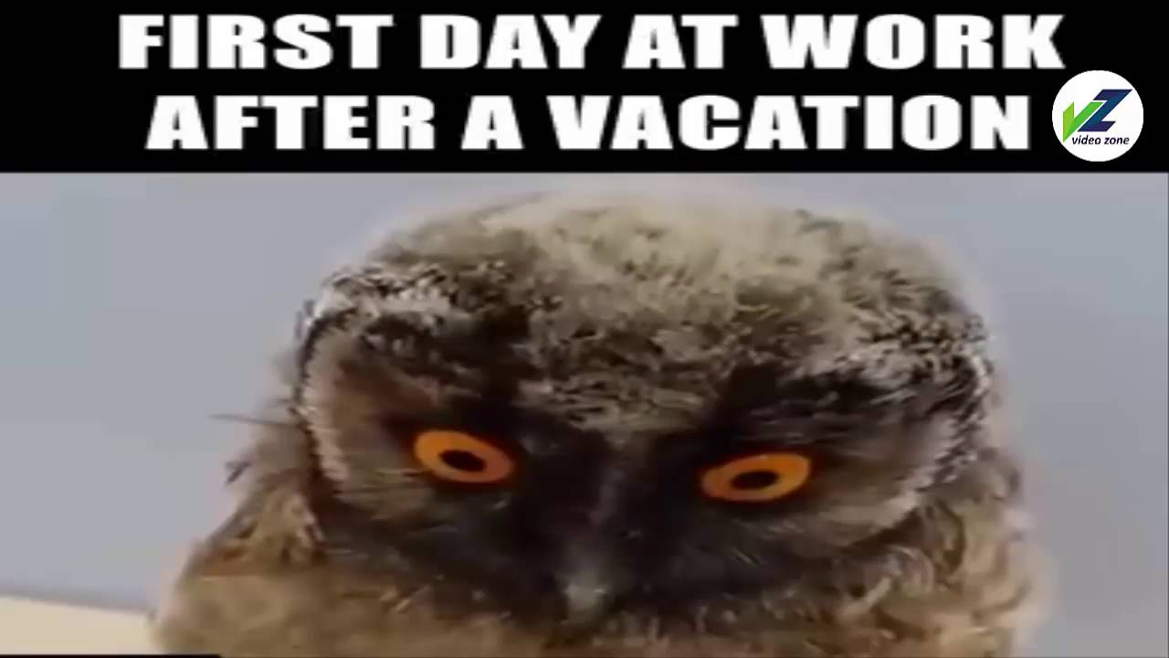 Welcome Back Vacation Meme