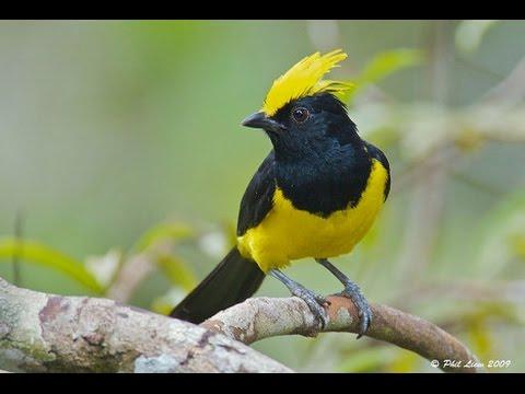 620+  Gambar Burung Keren HD Terbaru