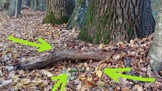 Необычные НАХОДКИ у корня 200 летнего ДЕРЕВАУдача или чудеса леса В Поисках Клада и Сокровищ