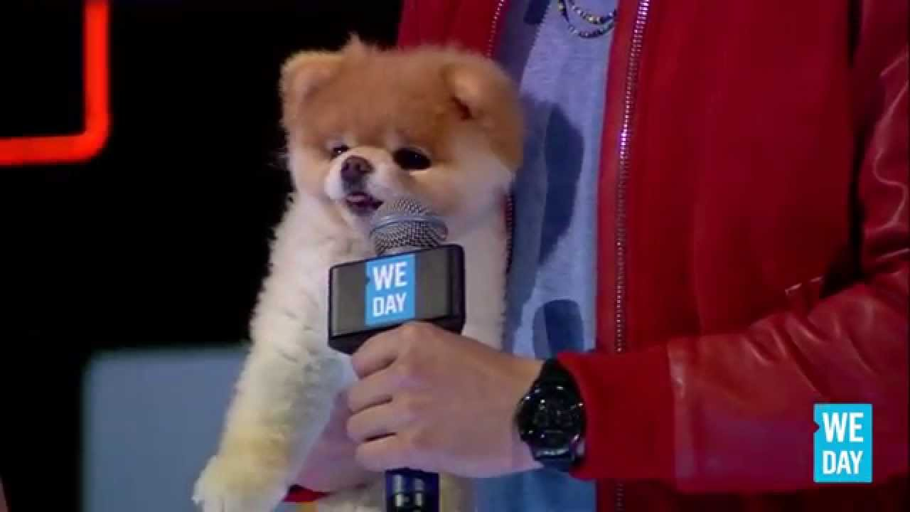 boo the dog at we day california youtube