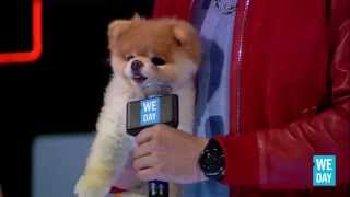 Boo the Dog at We Day California