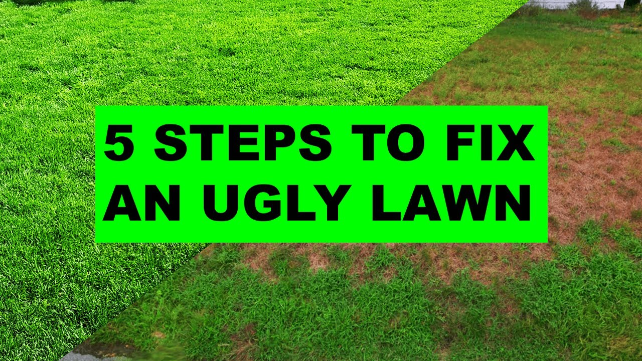 How to Fix an Ugly Lawn in 5 Easy Steps. Grass Daddy - How To Fix An Ugly Lawn In 5 Easy Steps - YouTube