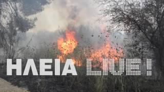 ilialive.gr - Φωτιά στο φράγμα Αλφειού έκαψε 70 στρέμματα