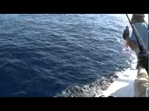 Costa Rica Fishing Jaco Beach Charters Sport