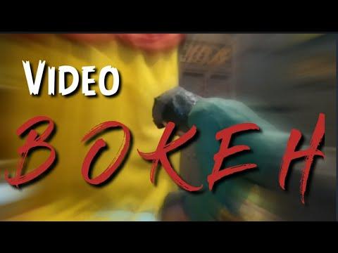 Video Bokeh Museum - YouTube