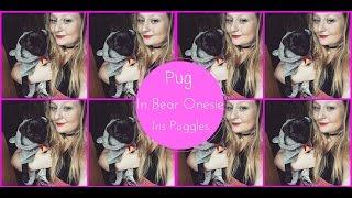Pug In Bear Onesie   Iris Puggles
