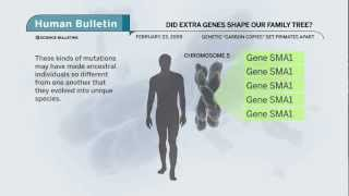 Science Bulletins: Did Extra Genes Shape Our Family Tree?