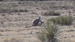 Putting the Stalk on a Coyote!