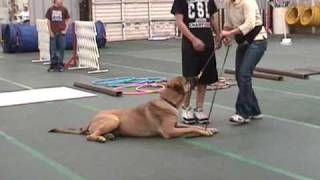 Good Manners One - Napa Valley Dog Training Club