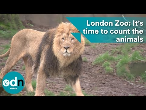 London Zoo: It's time to count the animals
