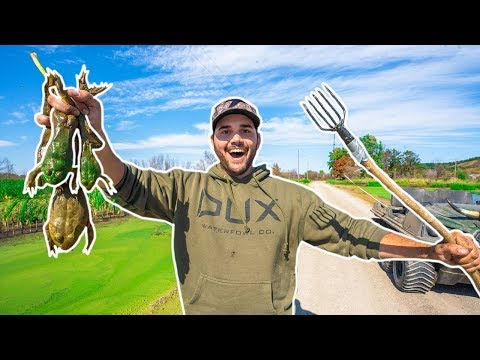 BULLFROG Hunting With HOMEMADE SPEARS!!!! (Catch Clean Cook)