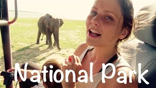 Elefantenherde geht baden!   Nationalpark Udawalawe   Sri Lanka #VLOG57