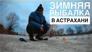 Зимняя ловля судака на Балансир Окуни в каждой лунке Рыбалка в Астрахани зимой