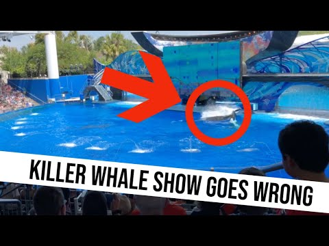 Seaworld Killer Whale Show Goes Wrong (with subtitles)