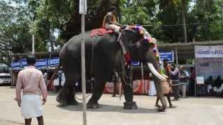 Repeat youtube video Koodalmanikyam elephants 2013