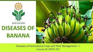 Diseases of Banana - Sigatoka Disease | By AP MEGA SEED PARK