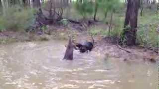 Я в шоке кенгуру пытается утопить собаку kenguru pitaetsya utopit sobaku