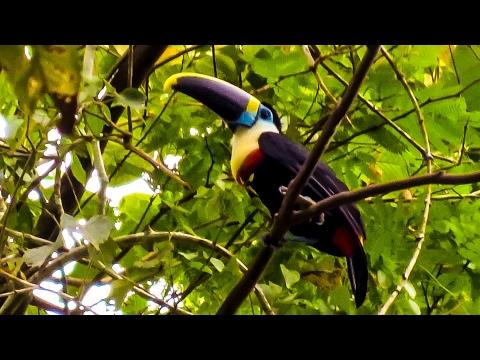 ADVENTURE IN  AMAZON JUNGLE. TOUR MANU NATIONAL PARK PERU