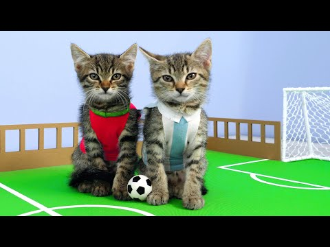 twin-kittens-play-football.-cute-rivals-match.-fun-cat-game-diy