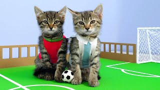 ⚽🐈Twin Kittens Play Football.🏆 Cute RIVALS match. Fun Cat Game DIY