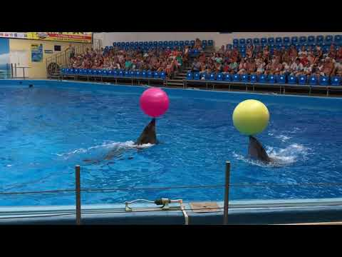 Дельфинарий NEMO в станице Голубицкая / NEMO Dolphinarium in Golubitskaya village, Russia