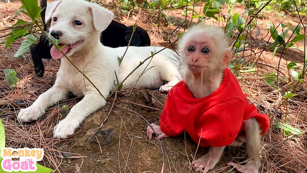 Two puppies scrambled T-shirt of baby monkey