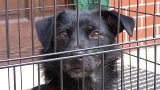 Schronisko dla bezdomnych zwierząt w Przylasku