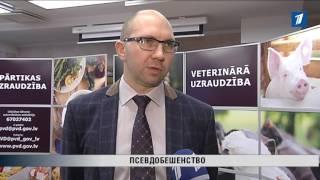 ПБК:  В Латвии зафиксирована опасная для животных болезнь Ауески