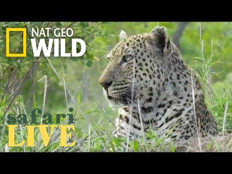Safari Live - Day 84 | Nat Geo WILD