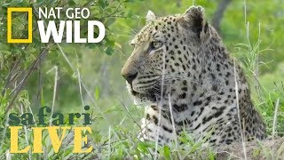 Safari Live - Day 84 | Nat Geo WILD thumbnail