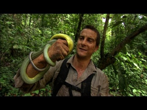 Man vs. Wild - Eating Giant Larva | Doovi