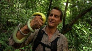 Snake Bites Bear  - Born Survivor