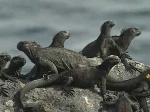 Galapagos: researching the animals (1/7)