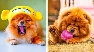 """8 de las razas de perros más tiernos que te harán decir """"awww"""""""