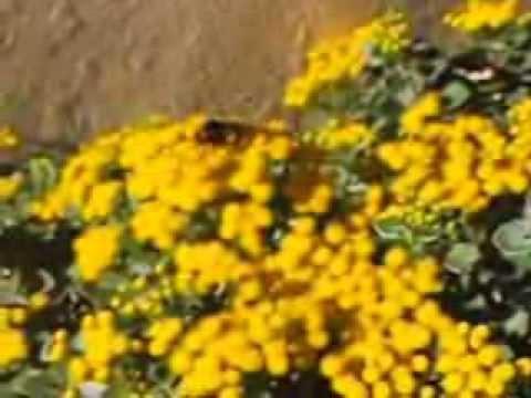 La Abeja Maya 3D | Willy vigila la colmena de YouTube · Duración:  11 minutos 22 segundos  · Más de 162.000 vistas · cargado el 19.06.2015 · cargado por Jakeysutripulacion