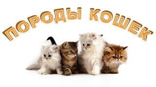 Породы кошек для детей. Развивающее видео. Познаём Мир.
