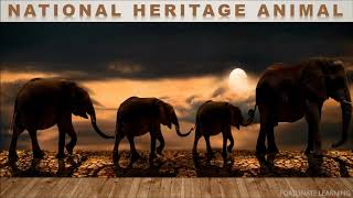 The National Heritage Animal of India | Indian Heritage Animal | The Elephant | Asian Elephant |