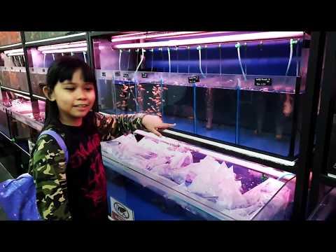 Hyper Pets Shop | Giant Mall Kelana Jaya | Fish Am Ni