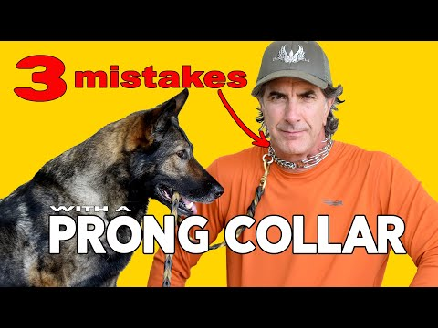 Prong Collar Mistakes People Make with German Shepherds - Robert Cabral Dog Training Video