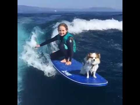 Little Girl Wake Surfs With Her Dog