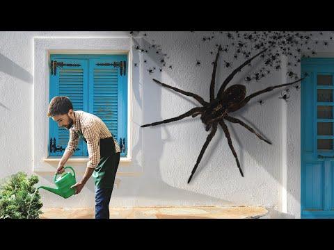 Вопрос: К какому виду относится паук на фото (см. внутри)?