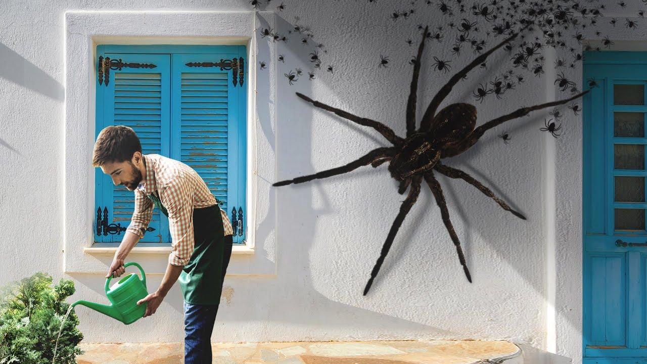 Что если однажды ваш город оккупируют гигантские пауки?