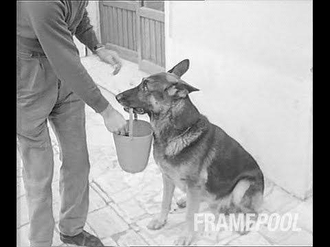 A Smart Dog