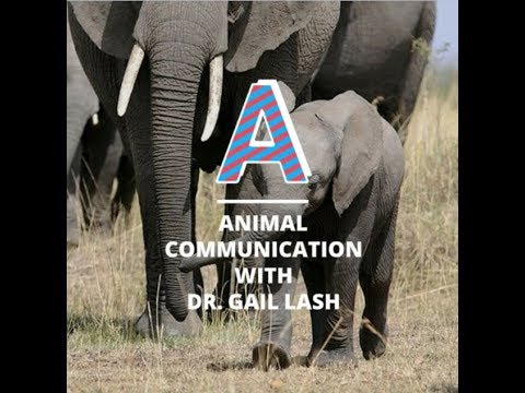 Animal Communicator Near Me With Dr. Gail Lash. Tourism For Peace