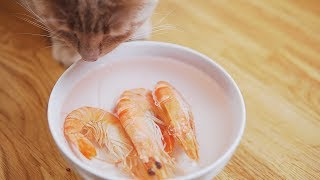Cat Loki | EP2 | Homemade Cat Food | Christmas Happy Meal | Prawn Tuna & Lettuce