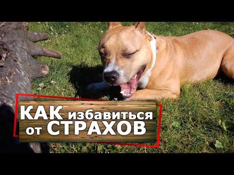 Вопрос: Как избавить собаку от пугливости?