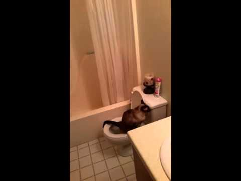 Max Toilet Trained Cat