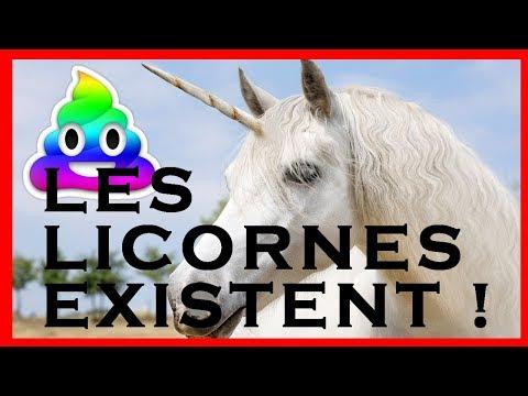 Des Licornes En France Youtube
